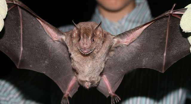 درباره خفاشها